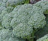 200+ Broccoli Seeds- Waltham Heirloom
