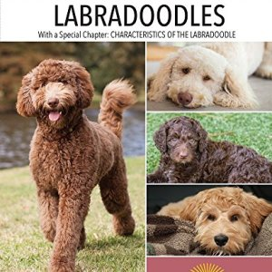 Labradoodles (Complete Pet Owner's Manual) 11