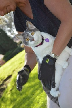 Best Cat Grooming Gloves