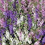 Park Seed Angelonia Serena Mix Seeds