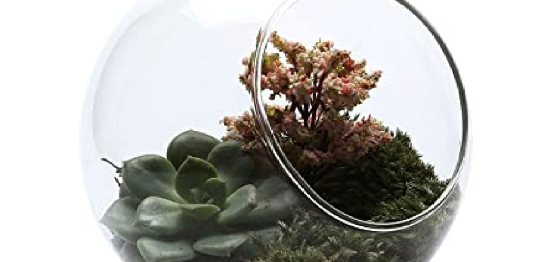 33e29b2e0 Los mejores 10 Terrario Plantas - Guía de compra, Opiniones y Análisis en  2019 - Losmejoreslista.com
