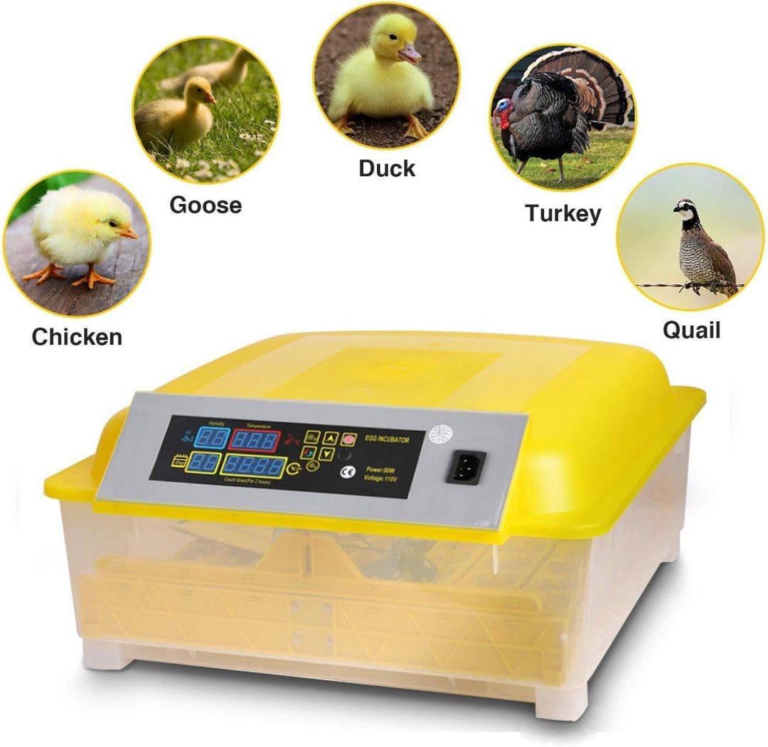 Best Poultry Egg Incubators