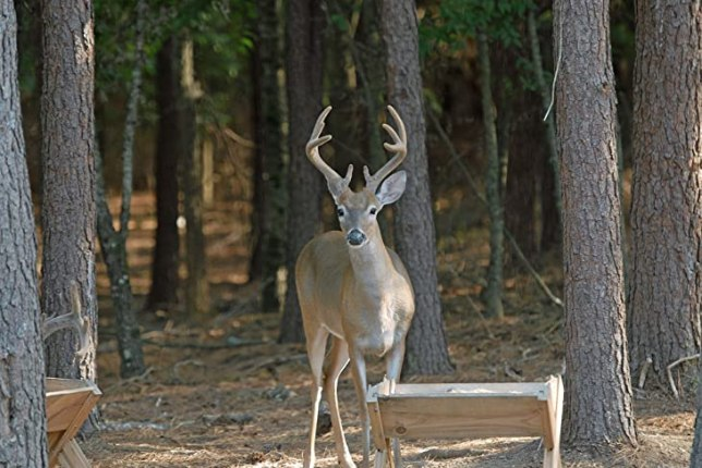 Benefits of Using a Deer Feeder