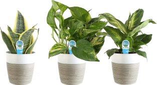 Costa Farms Clean Air 3-Pack O2, White Décor Planter