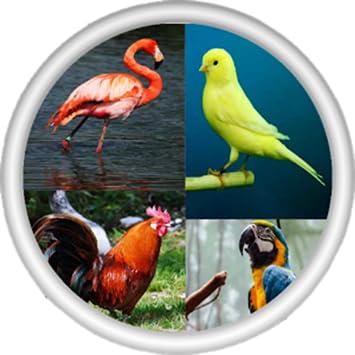 Amazoncom صور و اصوات الطيور العاب اطفال Appstore For
