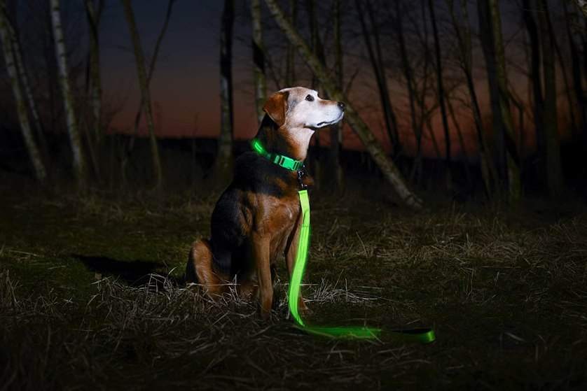 LED Dog collar, what to bring camping