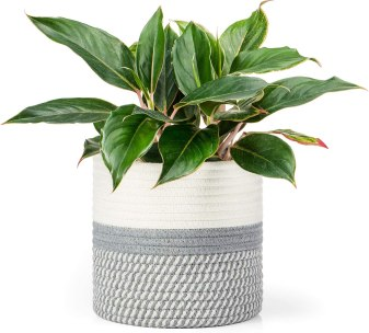 Dahey Small Cotton Rope Plant Basket Woven Storage