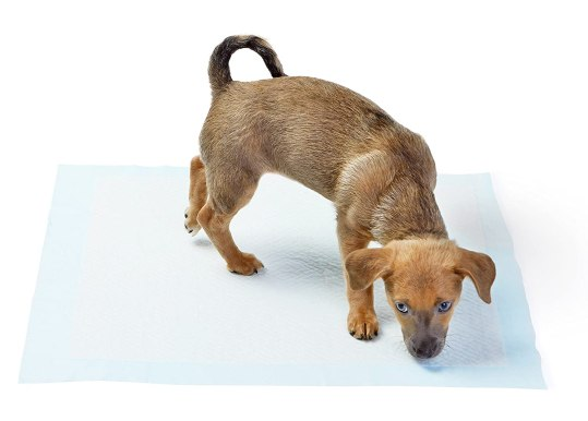 amazonbasics pet training pads review