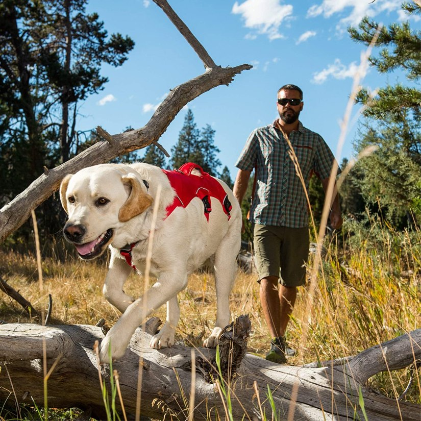 Ruffwear Web Master Dog Review