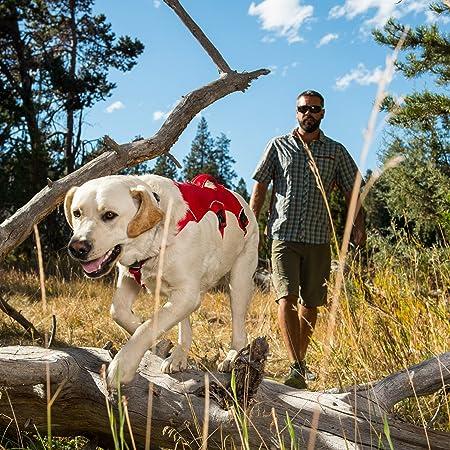 Ruffwear Web Master Dog Review