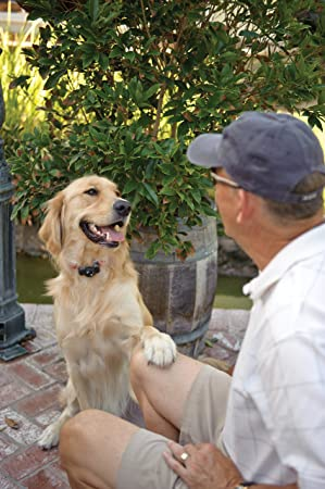 Dog-And-Owner