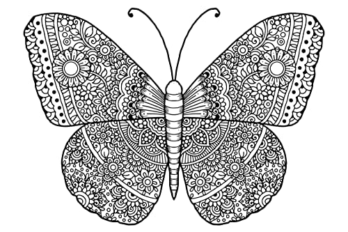 Amazon Com Butterfly Adult Coloring Stretched Primed Canvas To Color Size 8 X 12 Inches Handmade