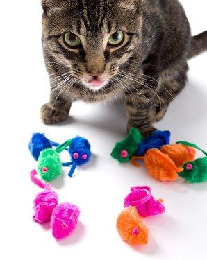 Mejores juguetes para gatos (análisis) 2019 1