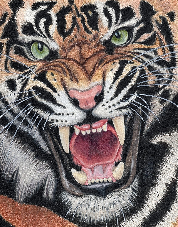 Amazon Com Tiger Angry Sumatran Snarling Wild Cat Jungle 8 5 X11 Colored Pencil Drawing Painting Sherry Goeben Art Handmade