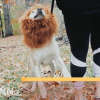 TOMSENN Dog Lion Mane - Realistic & Funny Lion Mane for Dogs - Complementary Lion Mane for Dog Costumes - Lion Wig for Medium to Large Sized Dogs Lion Mane Wig for Dogs 8