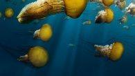 Permalink to Oceans