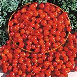 Помидор — это ягода, фрукт или овощ, разбираемся в путанице
