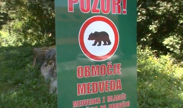 Območje medveda