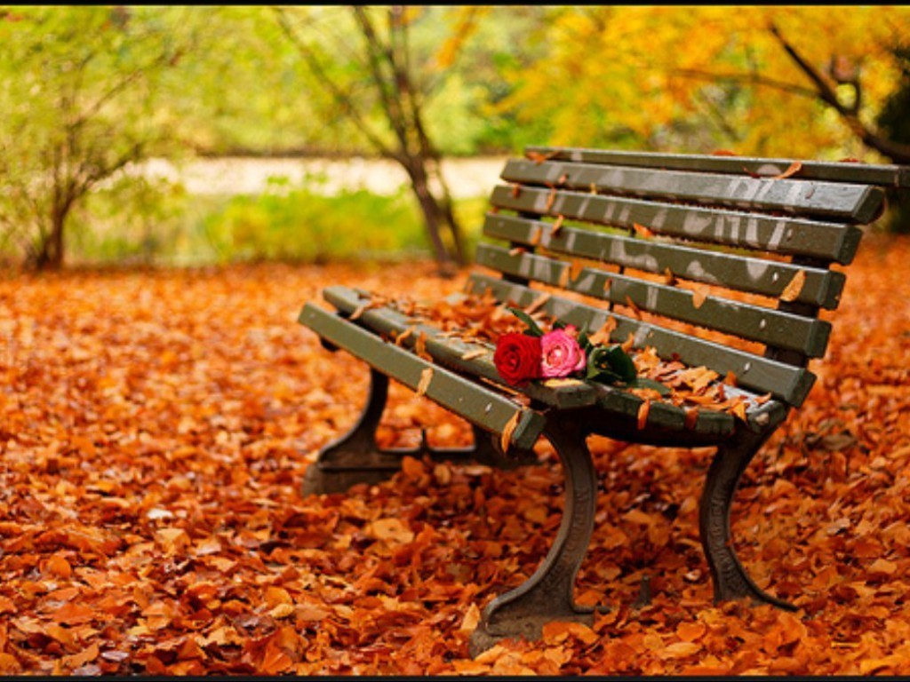 Image result for autumn leaves falling down like pieces into place
