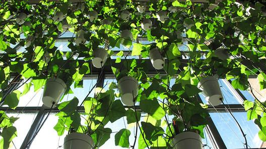 Window Garden. Image © BIG Ideas