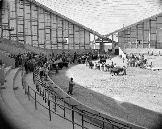 Raleigh Arena / Fred Severud. Image <a href='https://commons.wikimedia.org/wiki/File:Cattle_judging_event_at_Dorton_Arena_(Cow_Palace)_before_roof_was_installed._October_15th_1952_(21981642200).jpg'>© Fæ via Wikimedia</a>