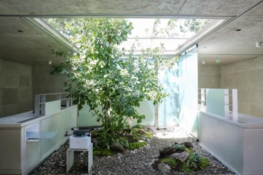 Atrium and Green Plant. Image © Fangfang Tian