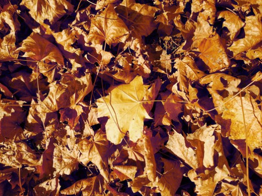 Leaves 01. Image © Flickr user Texture Palace licensed under CC BY-SA 2.0