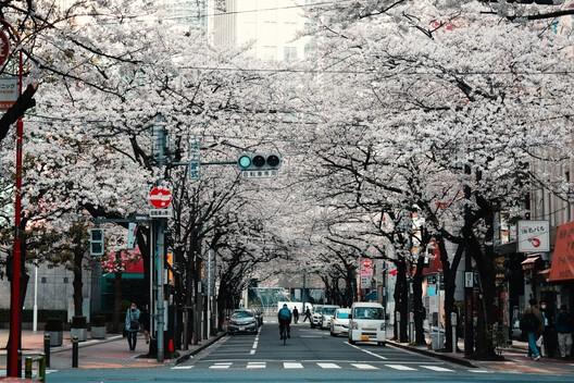 Tokyo, Japan. Credits: Agathe Marty