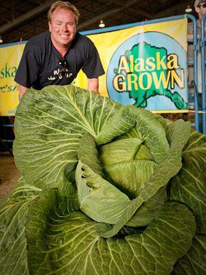 https://i1.wp.com/images.agoramedia.com/everydayhealth/gcms/pg-06-largest-cabbage-giant-vegetables-full.jpg
