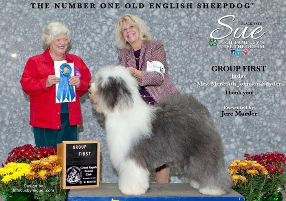 Old English Sheepdog | AKC Weekly Winners Gallery Blog