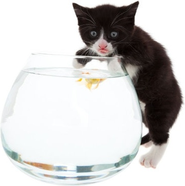 a cat and a goldfish 01 hd pictures