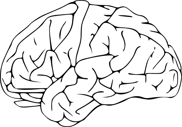 Brain Clip Art Free Vector In Open Office Drawing Svg