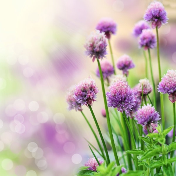 hd pictures of beautiful flowers 03