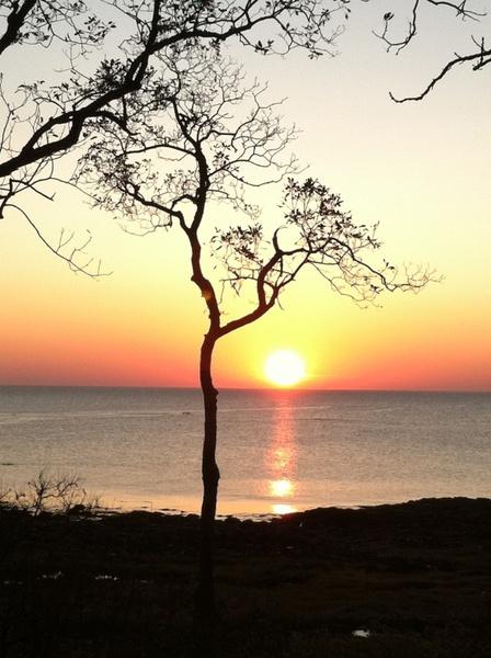 peace tree calm
