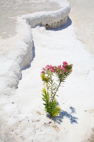 plant growing in desert