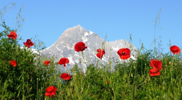 poppies mountain italy