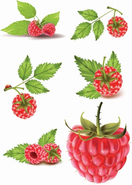 Raspberry Vector Free Vector Download 43 Free Vector For