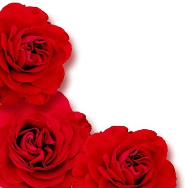 Red Flower Wallpaper Love 1 2leephd