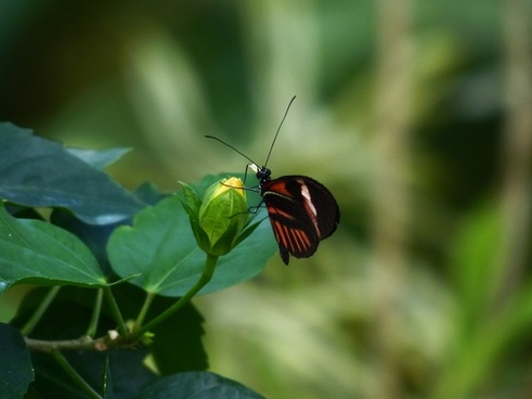 Image result for free butterfly images