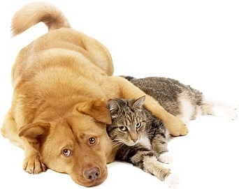 cute cats and dogs stock photo