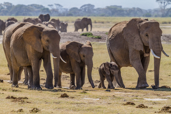 Image result for elephant family