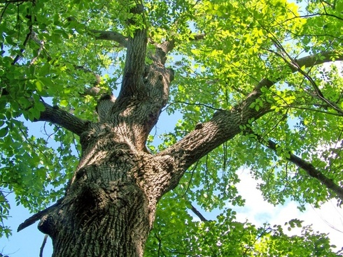 Image result for looking up at trees