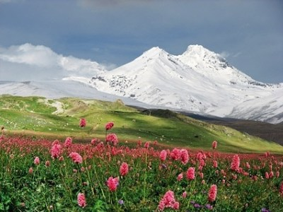 Wild flowers free stock photos download  11 993 Free stock photos     wild flowers under the snowcapped mountains picture