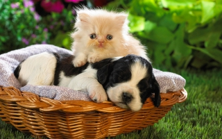 Cute animal wallpaper wallpapers for free download about  3 668     Cute Basket Buddies
