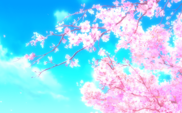 40 Sakura Blossom Hd Wallpapers Background Images