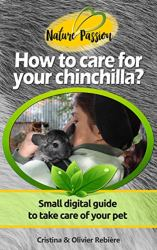How to care for your chinchilla?