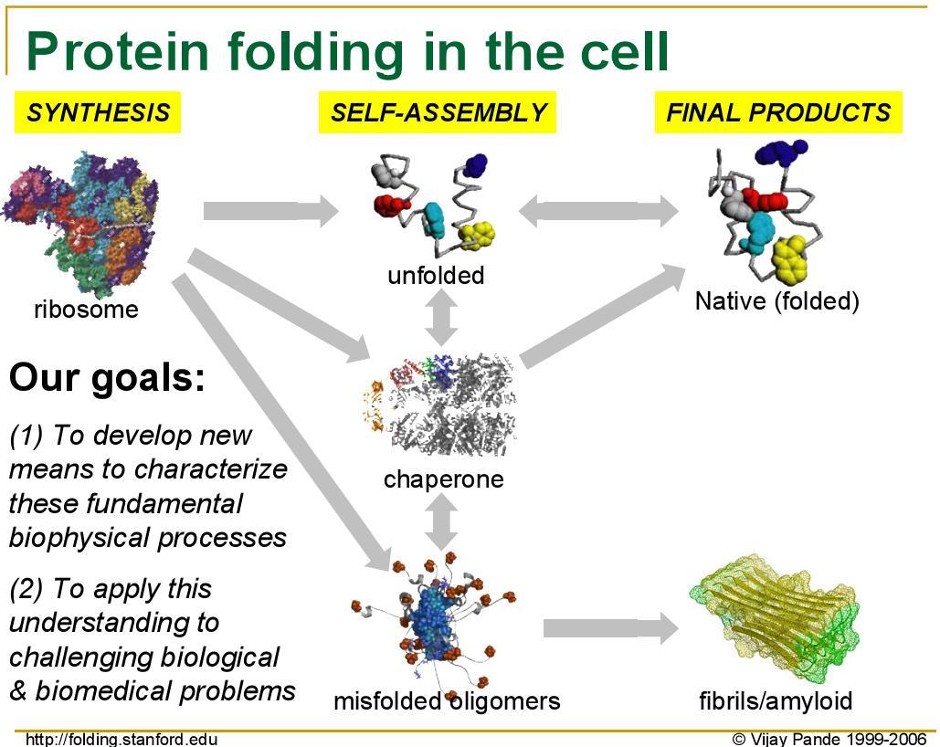 alzheimer's protein folding