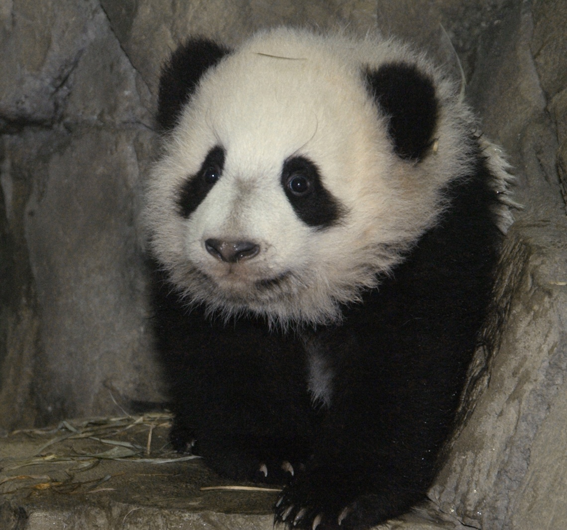 Image Result For Pandas Syndrome