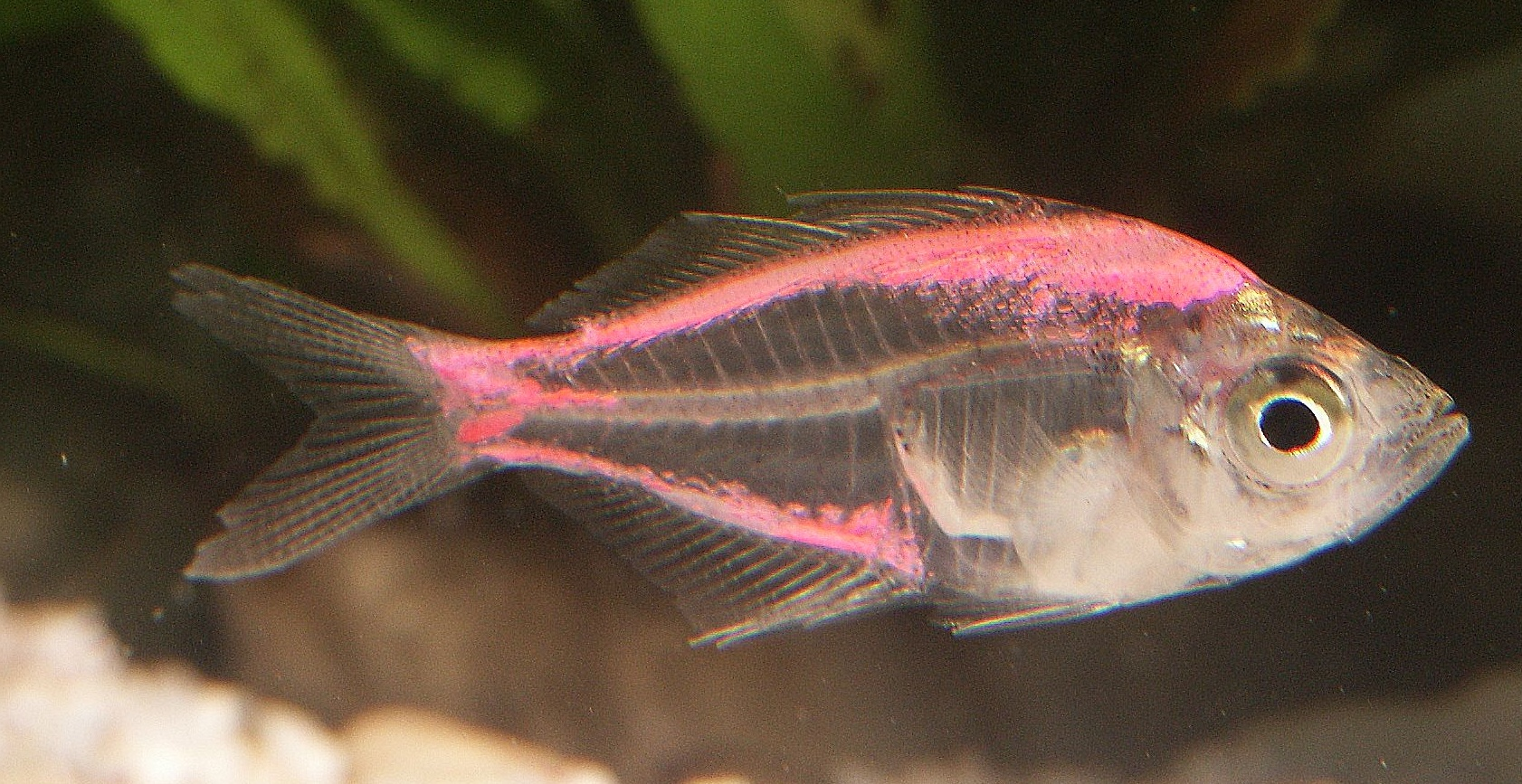 Picture Of Fish On Animal Picture Society