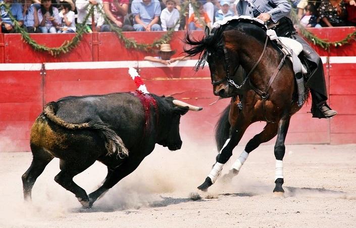Resultado de imagen para imagenes los caballos de las corridas de toros